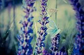 Blue butterfly on flower