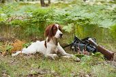 Setter With Hunting Birds And Gun