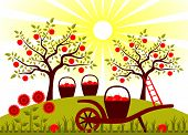 image of hand-barrow  - vector hand barrow with basket of apples in garden - JPG