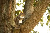 Squirrel Sitting in Tree