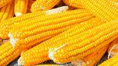 Pile Of Corn