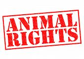 picture of animal cruelty  - ANIMAL RIGHTS red Rubber Stamp over a white background - JPG