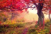 image of toned  - Majestic landscape with autumn trees in forest - JPG