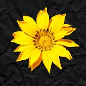Yellow Flower Against A Black Background