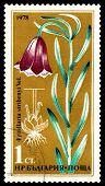 Vintage  Postage Stamp. Flower Fritillaria Stribrnyi.