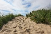stock photo of dune grass  - Path to beach in Wellfleet - JPG