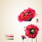 red poppies, greeting-card