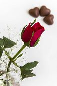 Rose Bud and Chocolates