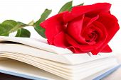 Open Book And Red Rose On Pages Of Book On White Background