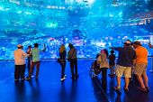 DUBAI, UAE - 1 APRIL 2014: People walking inside the Oceanarium tunnel iat Dubai Mall. It is the lar