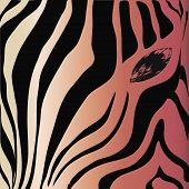 Zebra Head And Eye On A Colored Background