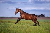 Young beautiful athletic horse with braided mane rides on the beautiful background