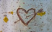 picture of carving  - Birch tree with carved heart crossed by a love arrow - JPG