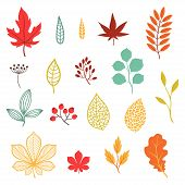 Set of various stylized autumn leaves and elements.