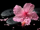 Beautiful Spa Concept Of Delicate Pink Hibiscus, Zen Stones With Drops And Pearl Beads On Water,  Cl