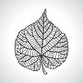 Stylized detail silhouette of leaf isolated on background.