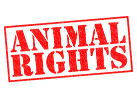 pic of animal cruelty  - ANIMAL RIGHTS red Rubber Stamp over a white background - JPG