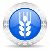 grain blue icon, christmas button, agriculture sign