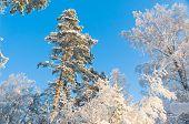 White Fairytale Under Blue Skies