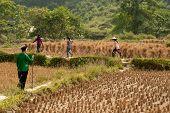 Farmer Walking In A Field.