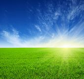 Green field, blue sky and sun