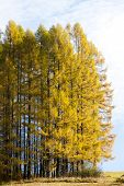 forest in autumn, Slovakia