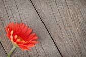 Orange gerbera flower on wooden background with copy space