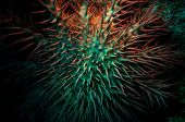 Poisonous crown of thorns sea star (Acanthaster plancii, echinoderm), Egypt.