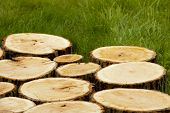 Background of tree stumps on the grass