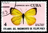 Vintage  Postage Stamp. Butterfly Eurema Dina Dina.
