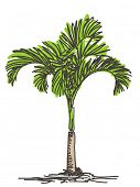 Palm tree sketch. Isolated. Hand drawn vector illustration