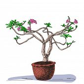Sketch of blossom small tree in clay pot, Hand drawn Vector illustration