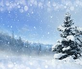 Winter background with snow and spruce. mountains, alps