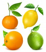 Collection of citrus fruits: lemon, lime, tangerine and orange with leaves. Vector illustration.