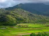 the fields of kauai