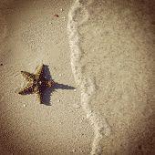 Instagram Of Beautiful Starfish On Beach