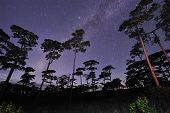 Beautiful night sky full of stars at pine tree forest Phu Soi Dao national park Uttaradit province T