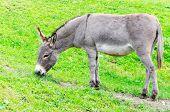 Donkey In The Landscape