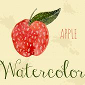 Hand drawn style watercolor apple. Nature