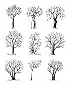 Hand Drawn Trees Isolated, Sketch