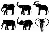 stock photo of elephant ear  - Black silhouettes of elephants isolated on white background - JPG