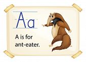 Illustration of alphabet A is for ant-eater