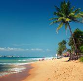 Tropical sandy beach with palm trees. Hikkaduwa, Sri Lanka