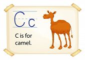 Illustration of alphabet C is for camel
