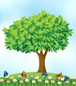 Illustration of a scene with tree and butterflies