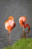 image of long-legged-birds  - Perfect birds in water outdoors in nature - JPG