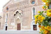 Cathedral Santa Maria Maggiore Of Udine, Italy, With Yellow Flowers
