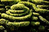 picture of dwarf  - Dwarf shrubs - JPG