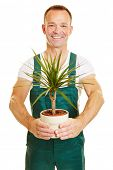 Smiling man in green overall holding a plant as a gardener