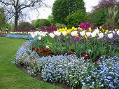 May Flowers In Hyde Park